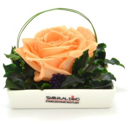 Dekorace stabilizovaná růže Barva: Peach