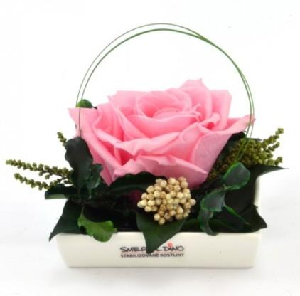 Dekorace stabilizovaná růže Barva: Light Pink
