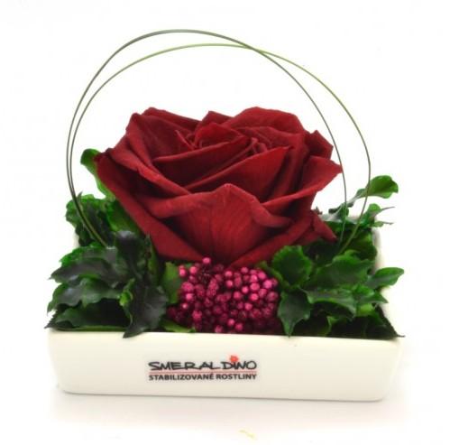 Dekorace stabilizovaná růže Barva: Burgundy