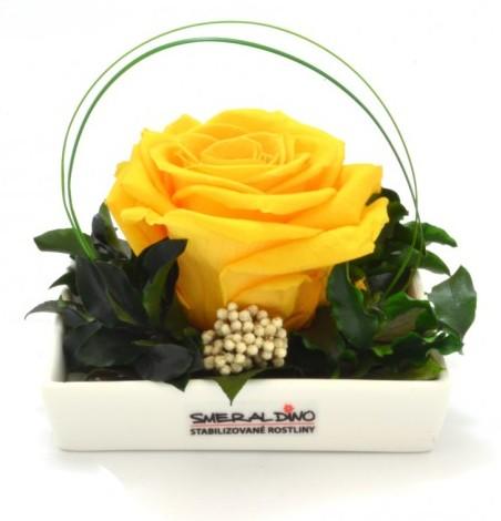 Dekorace stabilizovaná růže Barva: Yellow