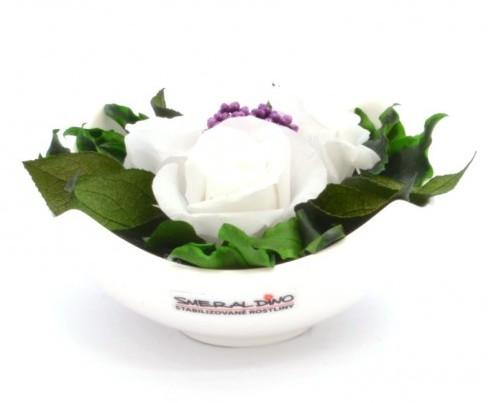 stabilizovaná růže Barva: White