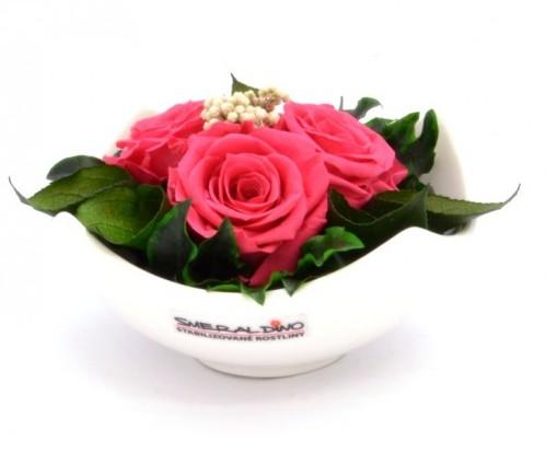 stabilizovaná růže Barva: Dark pink
