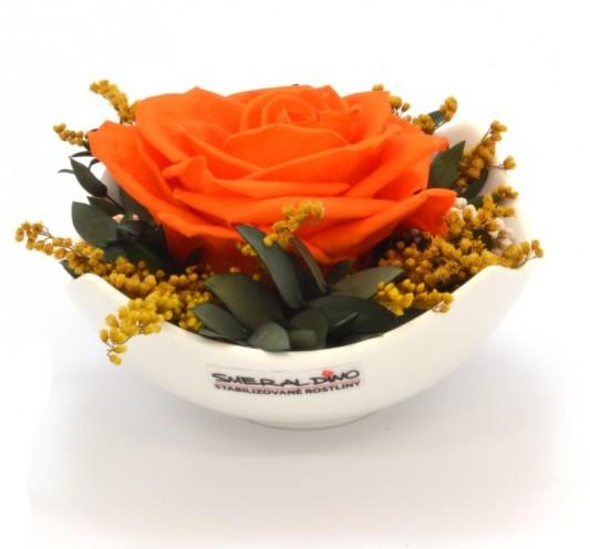Stabilizovaná růže Barva: Orange