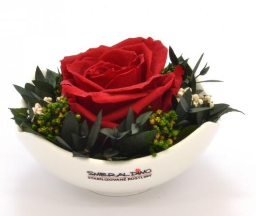 Stabilizovaná růže Barva: Burgundy