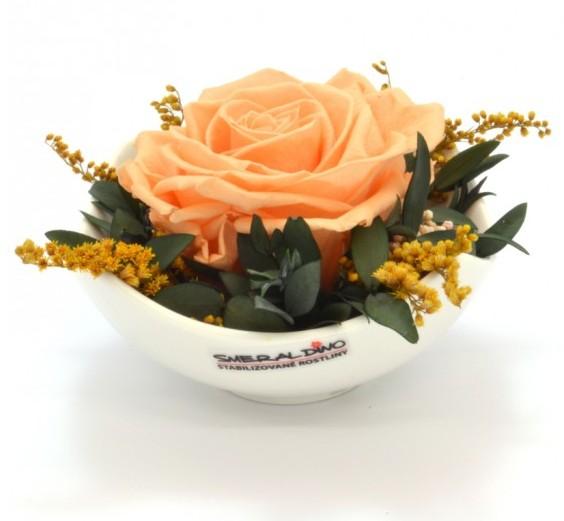 Stabilizovaná růže Barva: Peach