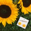 FLOWERSKI SUNFLOWER