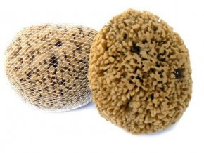 Caribbean Sun Mořská houba minerální karibská 11-12 cm