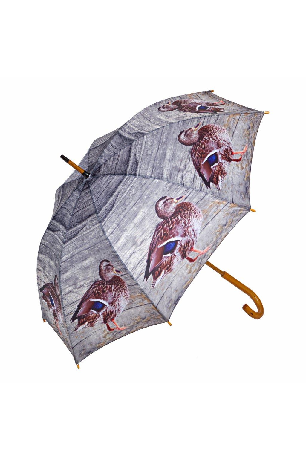 Deštník - kachna divoká