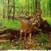 Fotopasca Wildguarder Watcher1 4G Camo Green 12