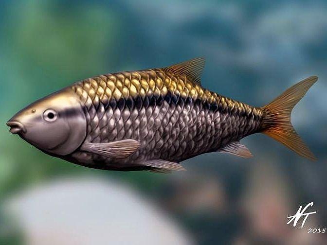 Jianghanichthys hubeiensis - sladkovodní ryba z Číny