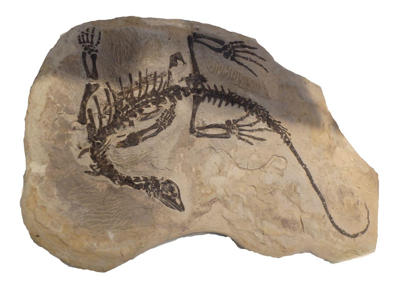 Definice paleontologie, její rozdělení a význam