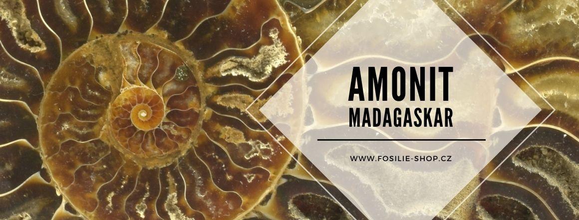 Amonit fosilie-shop.cz