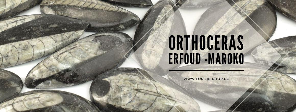 Orthoceras - zkameněliny z Maroka