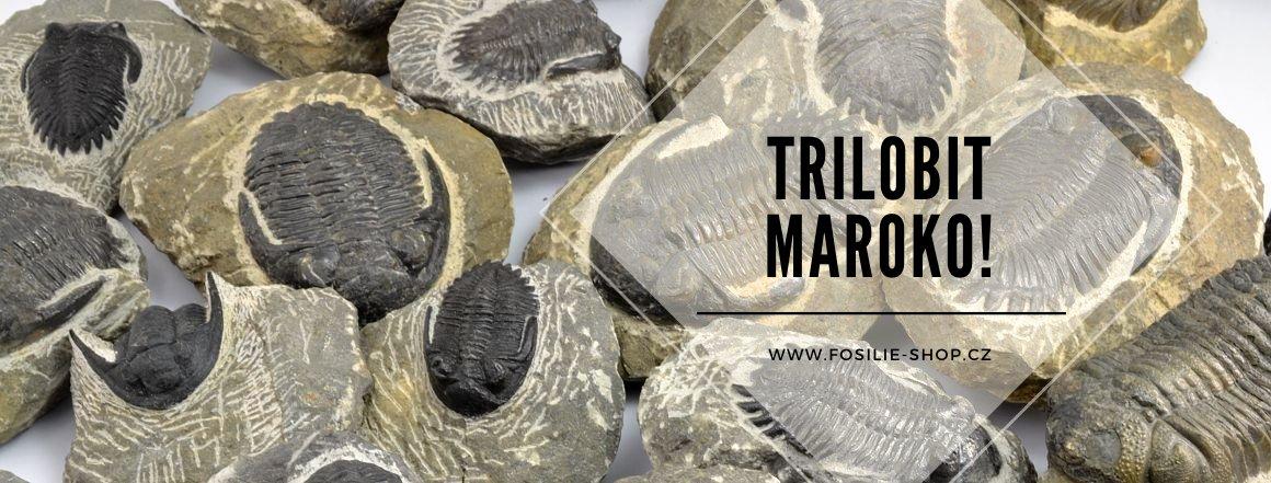 Trilobiti z Maroka