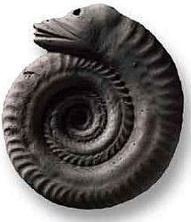 Hadí kámen - amonit s hlavou hada