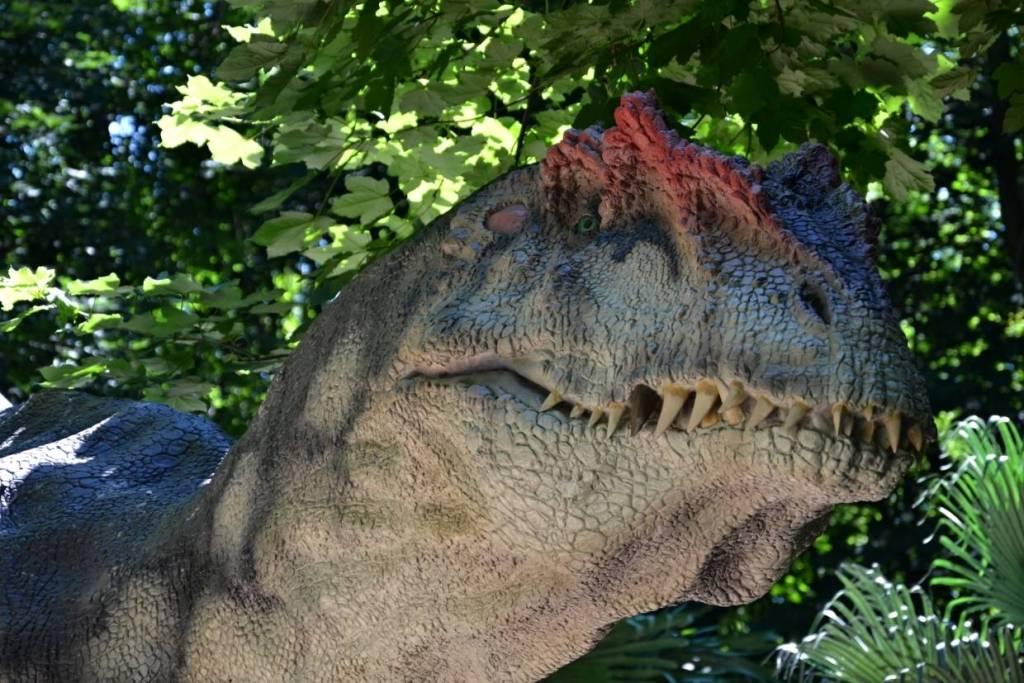 Allosaurus, detail hlavy - v dinoparku Vyškov.