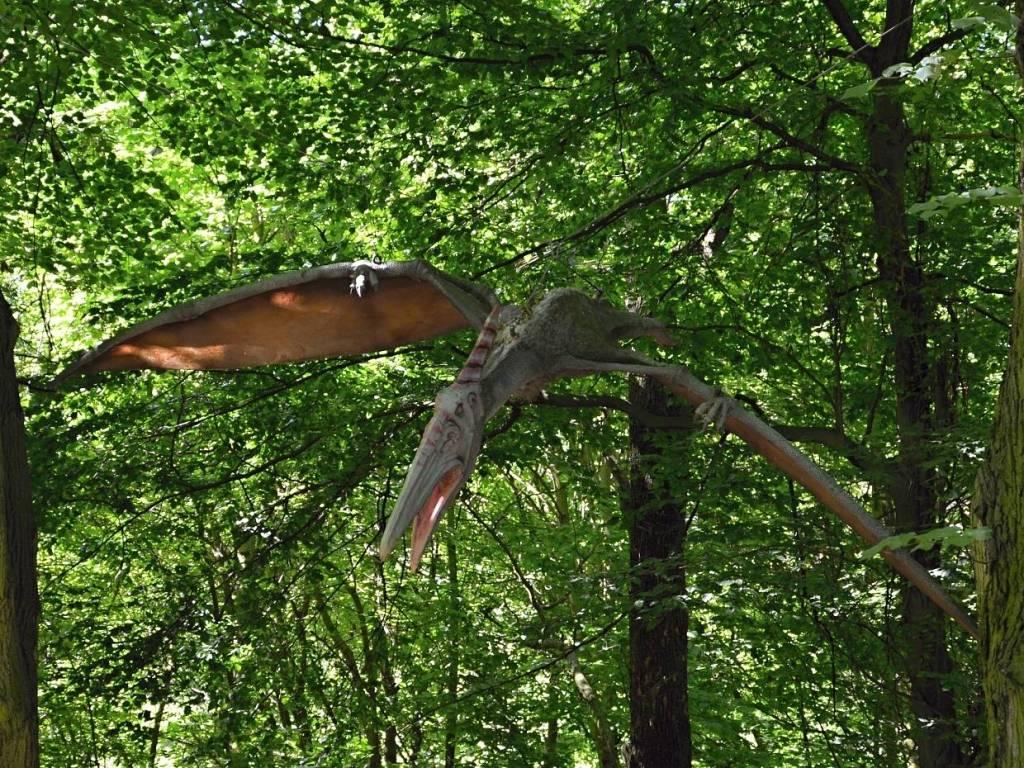 Pteranodon pterosaur - Vyškov dinopark