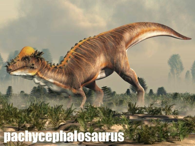 pachycephalosaurus-atlas-dinosauru