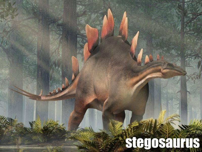 stegosaurus-atlas-dinosauru