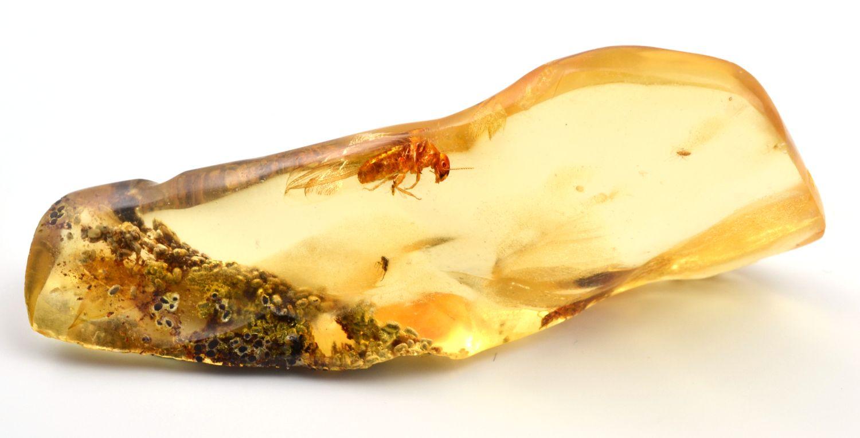 jantar-madagaskar-hmyzem