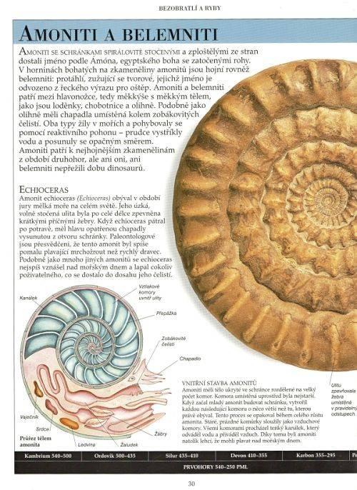 Dinosauři a život v pravěku - David Lambert - amoniti-belemniti