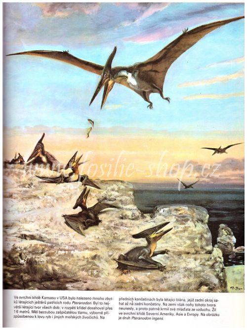 Kniha o pravěku - pteranodon