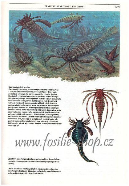 zkamenela-minulost-oldrich-fejfar-kniha