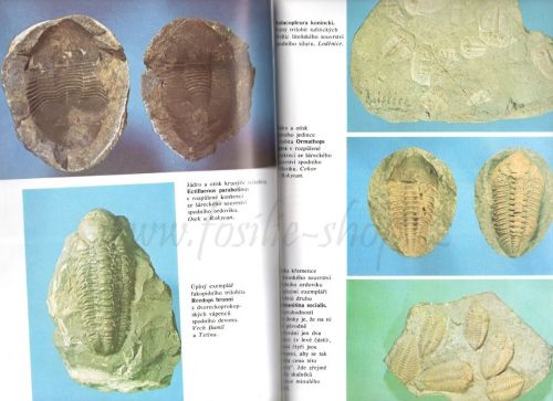zkamenely-svet-prokop-kniha