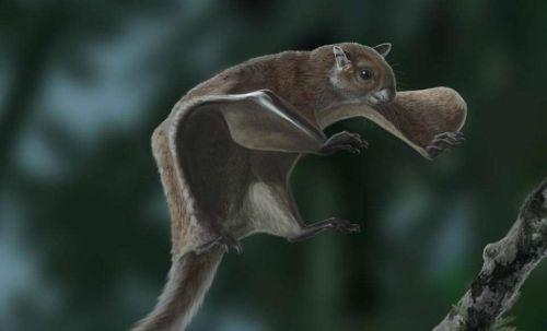 miopetaurista-neogrivensis