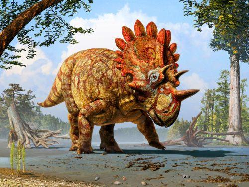 regaliceratops-peterhewsi