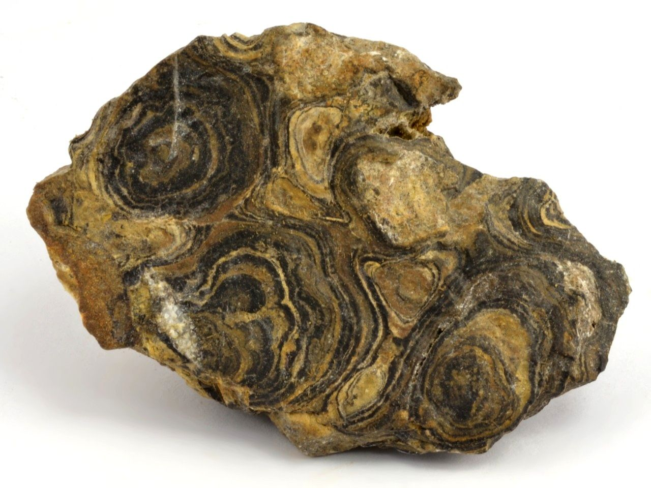 stromatolit-peru