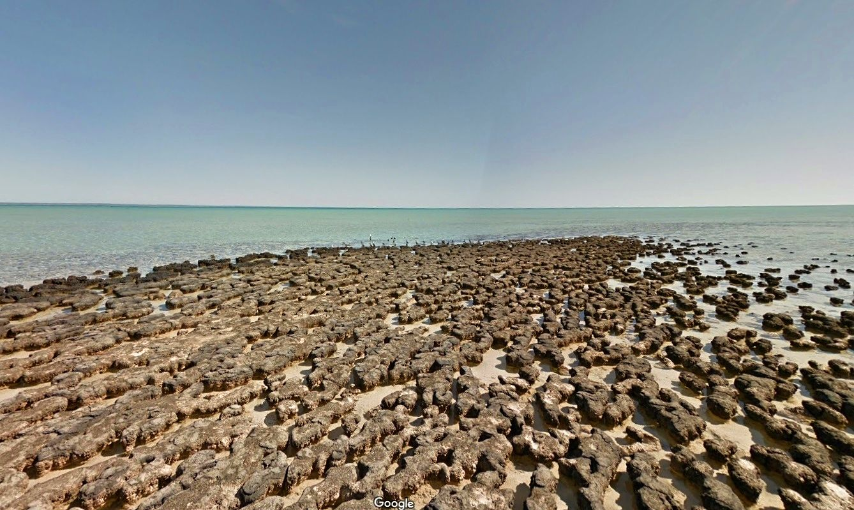 stromatolity-hamelin-pool-shark-bay
