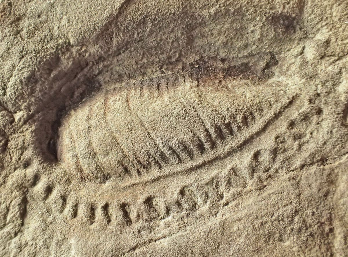 Kimberella_quadrata-zkamenelina