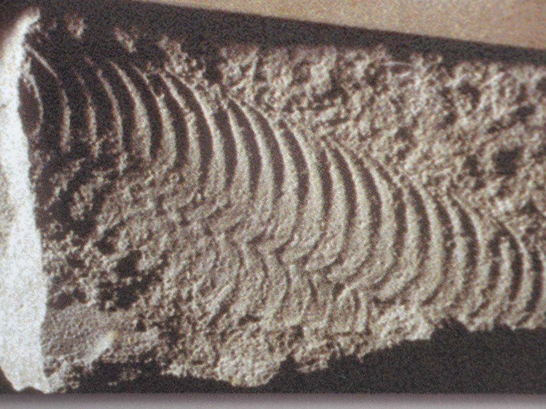 Pteridinium