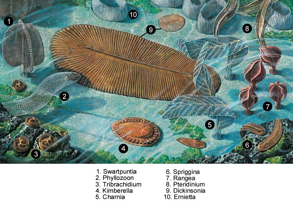 ediakarska-fauna-edikar