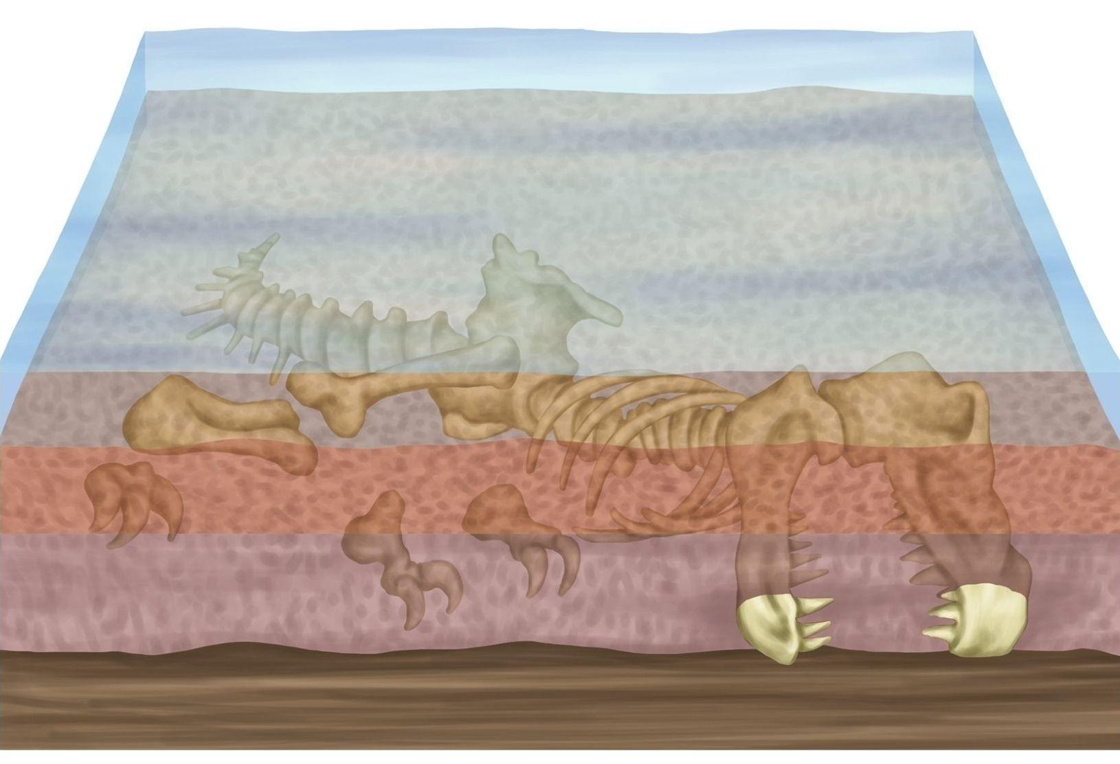 jak-vznikaji-fosilie-1