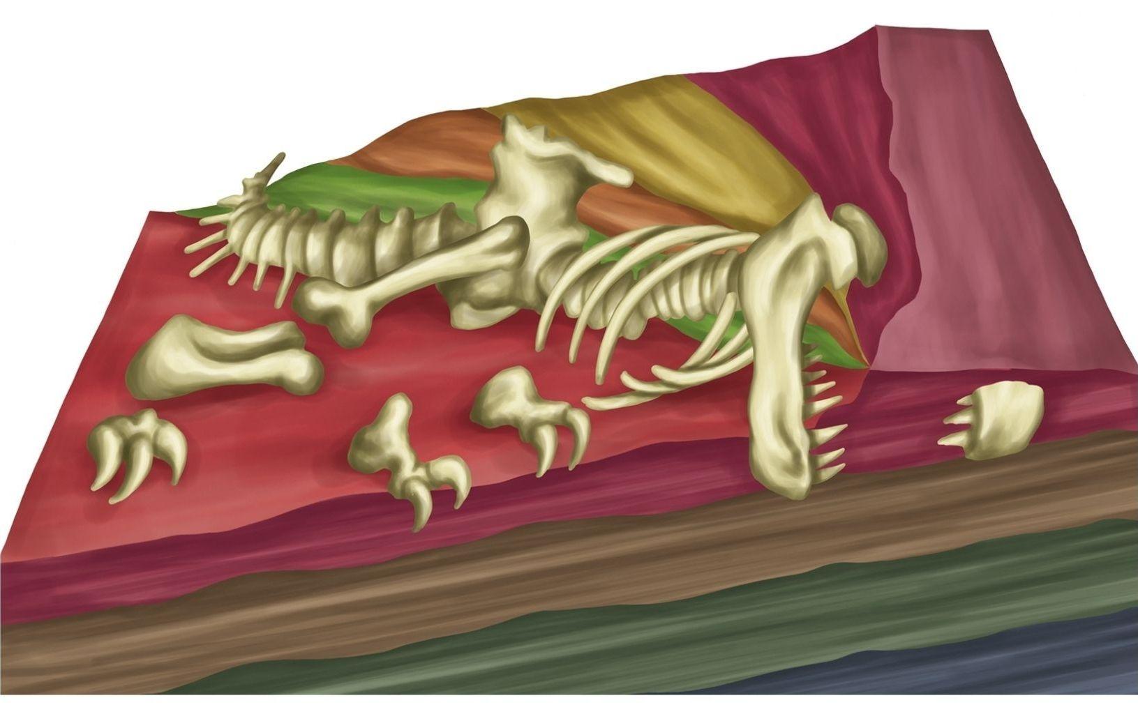jak-vznikaji-fosilie-4