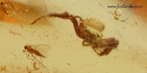 jantar-kopal-hmyz-pavouk