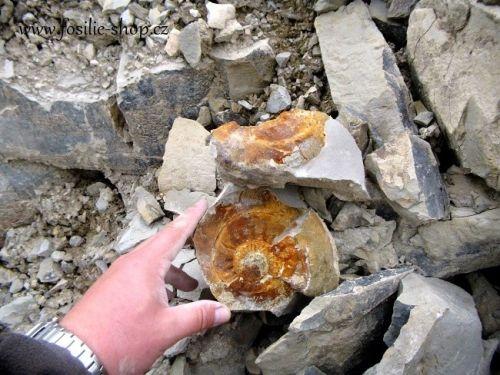 nemecko-lokalita-amonitu
