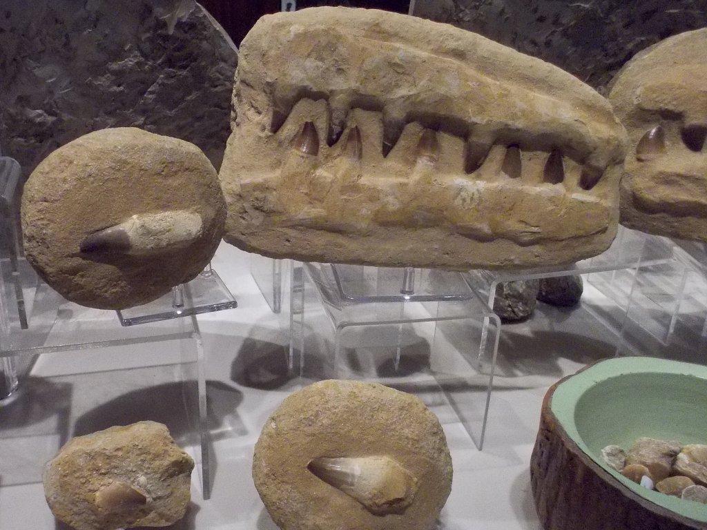 celisti-a-zuby-mosasaurus