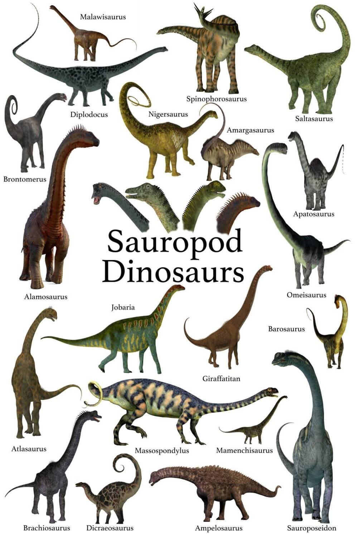 sauropodni-dinosauri-seznam