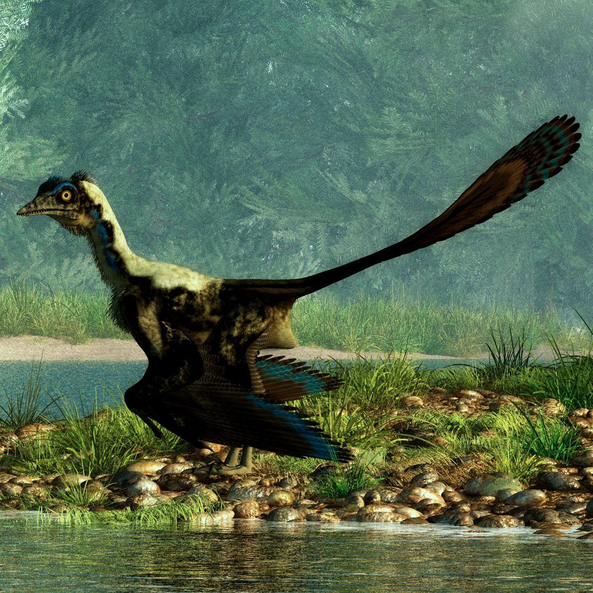 archeopteryx-detail