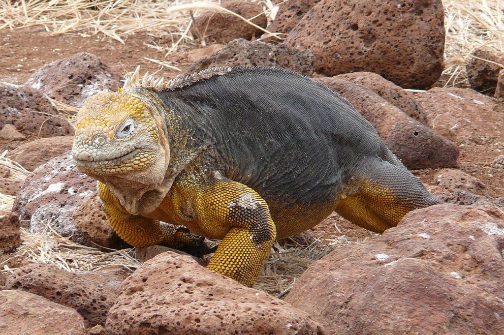 haterie-tuatara-zivouci-fosilie