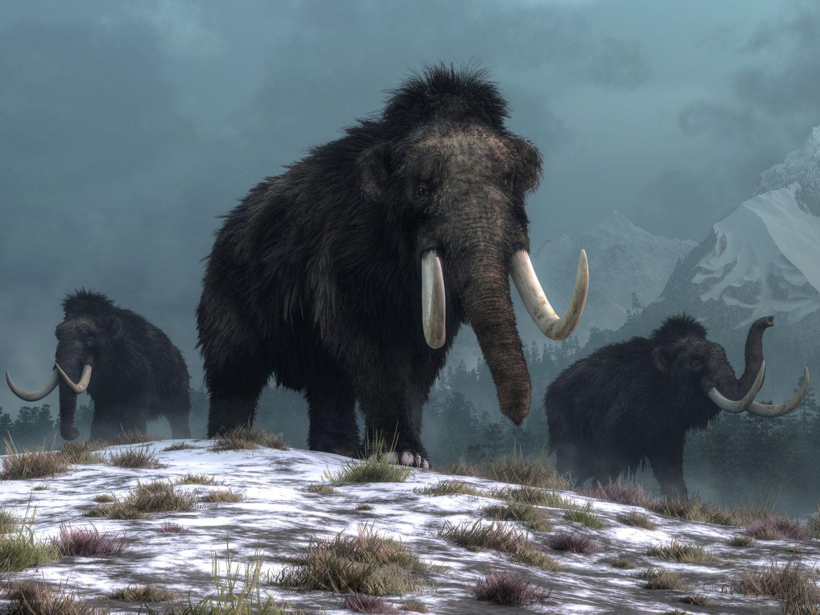 mamut-srstnaty