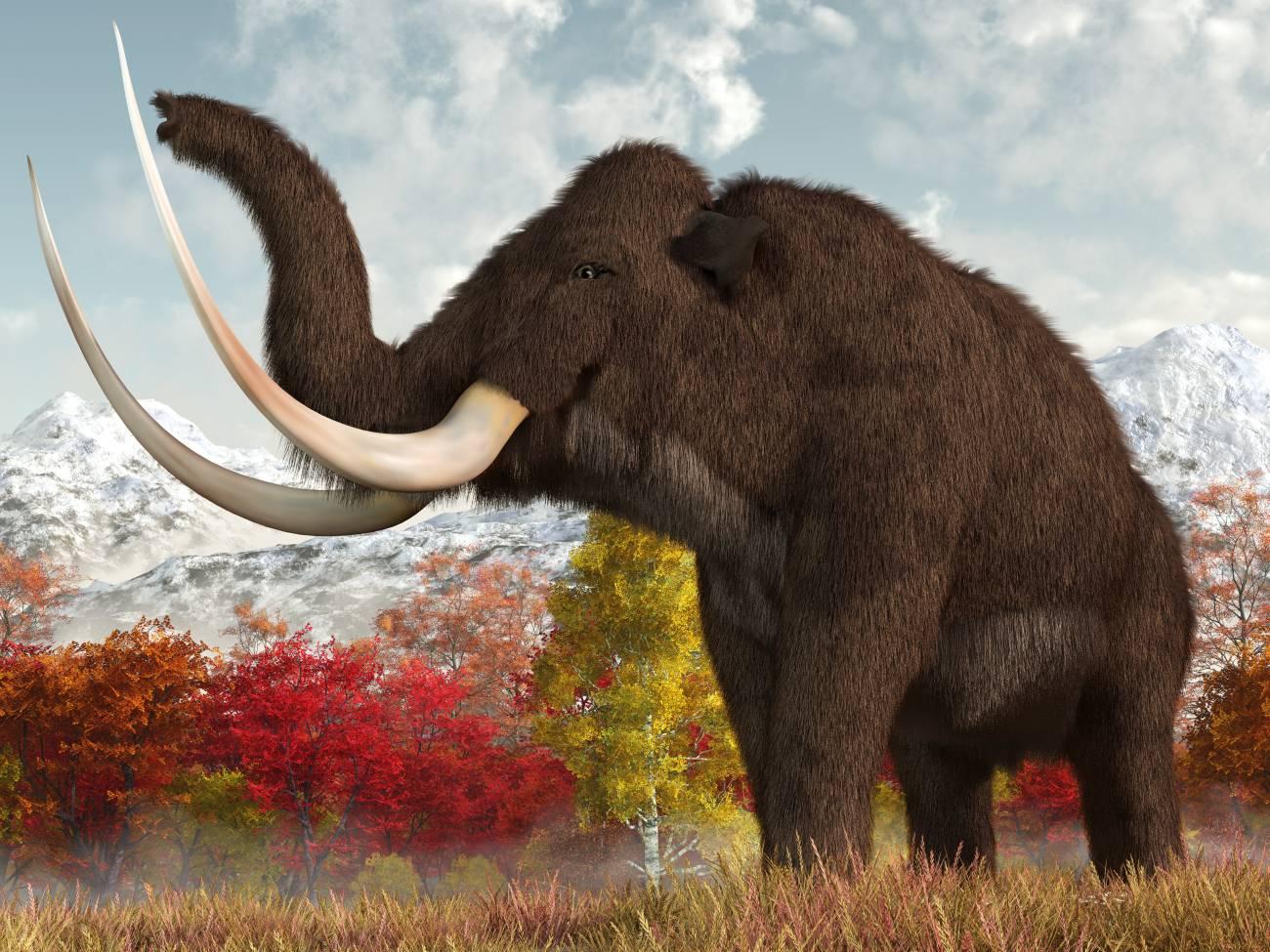 mamut-srstnaty_1