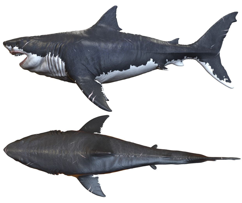 Carcharocles-megalodon-nejvetsi-zralok