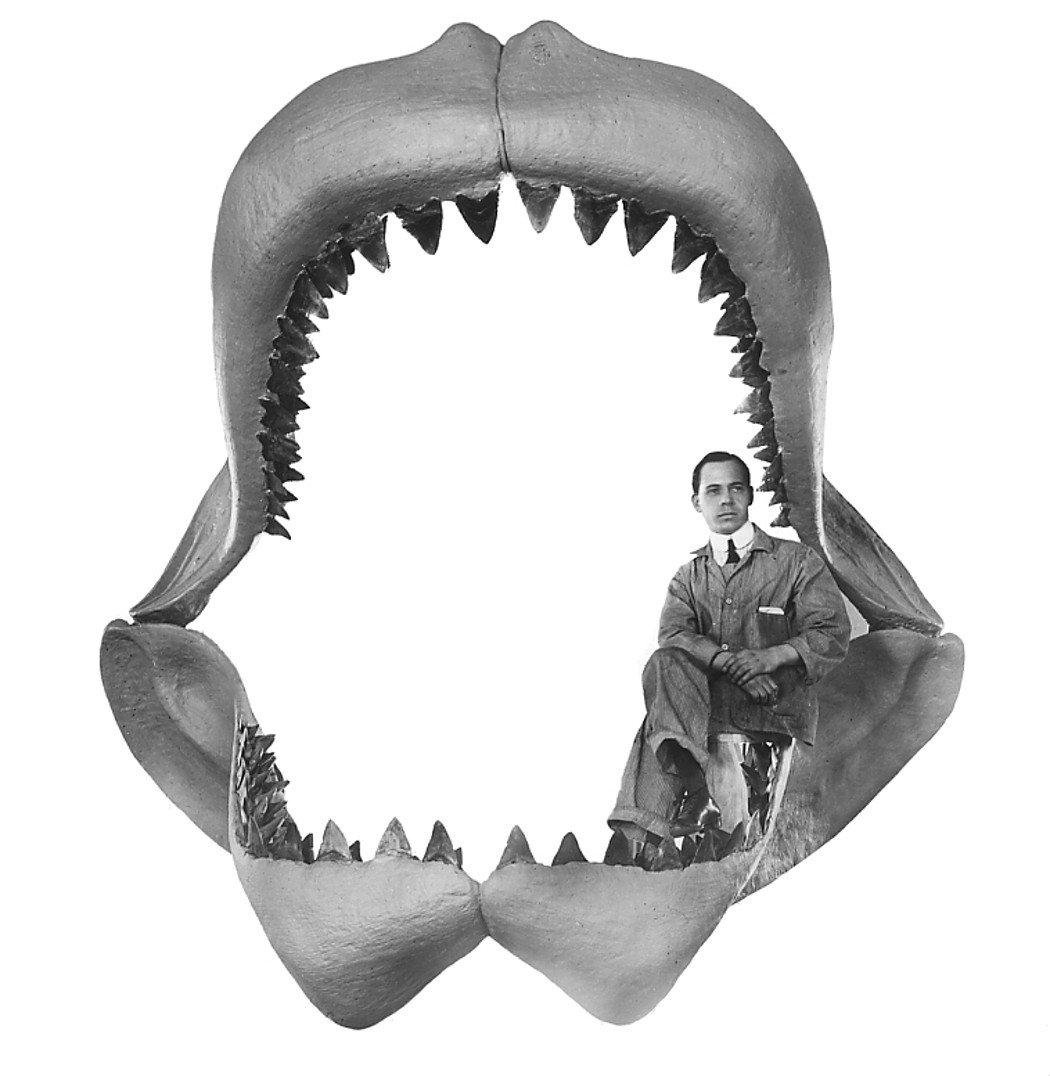 Carcharodon_megalodon