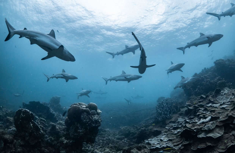 zraloci-druhy