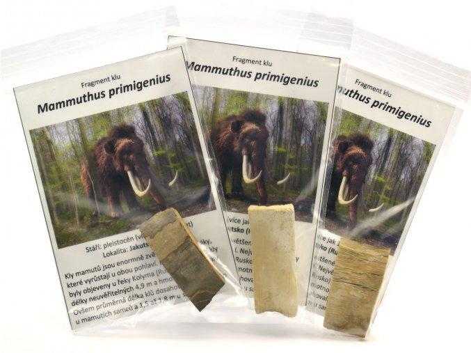 Mammuthus primegenus - kel