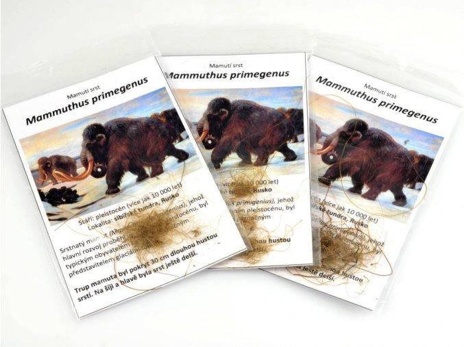 Mammuthus primegenus - srst